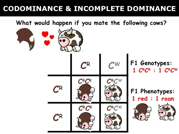 02 Codominance Incomplete Dominance