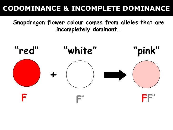 02 Codominance Incomplete Dominance