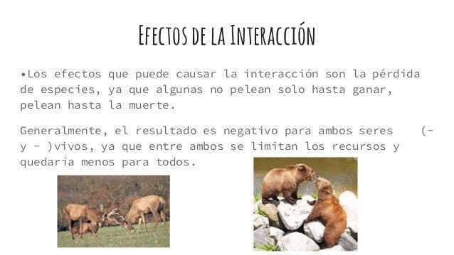 EfectosdelaInteracción •Los efectos que puede causar la interacción son la pérdida de especies, ya que algunas no pelean s...