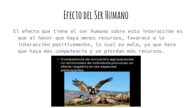 EfectodelSerHumano El efecto que tiene el ser humano sobre esta interacción es que al hacer que haya menos recursos, favor...