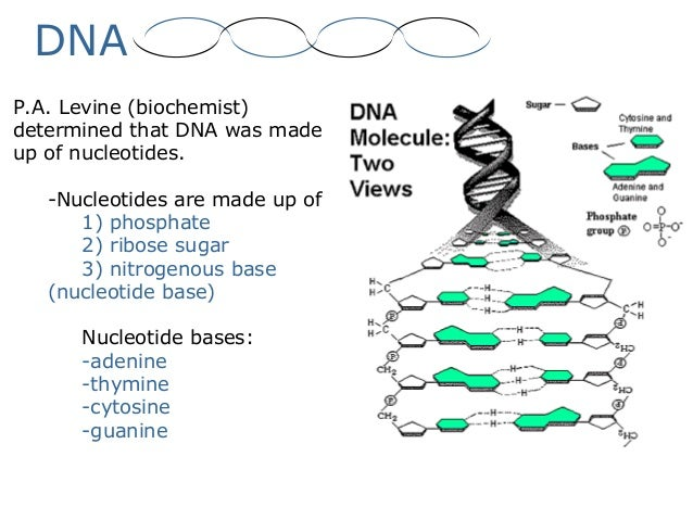 02 dna – Dna Structure and Replication Worksheet