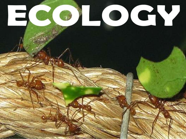 Ecology – the study of how organisms interact witheach other and their environment.Introduction to Ecosystems