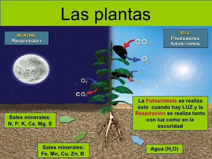 Respiracion De Las Plantas Gif: Las Plantas