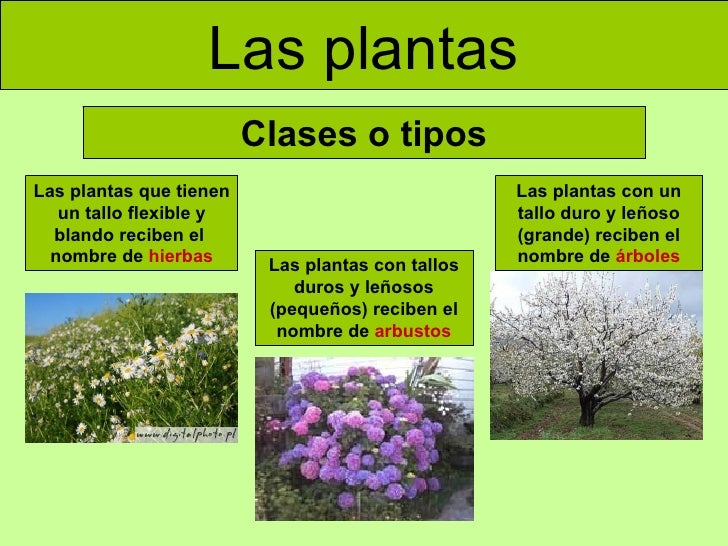 las plantas clases o tipos las plantas que tienen un