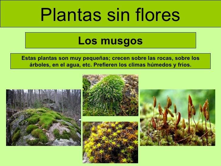 Clases De Musgo Clases De Musgo With Clases De Musgo Los Musgos