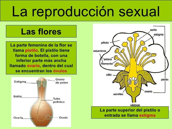 Reproduccion sexual y asexual de las plantas para primaria