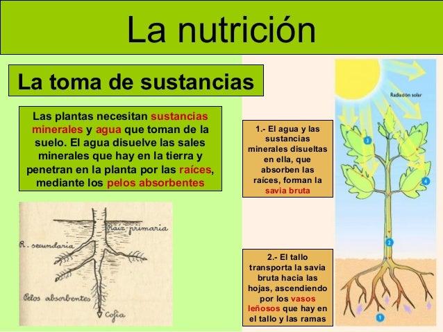 Médica Sur Conoce Los Nutrientes