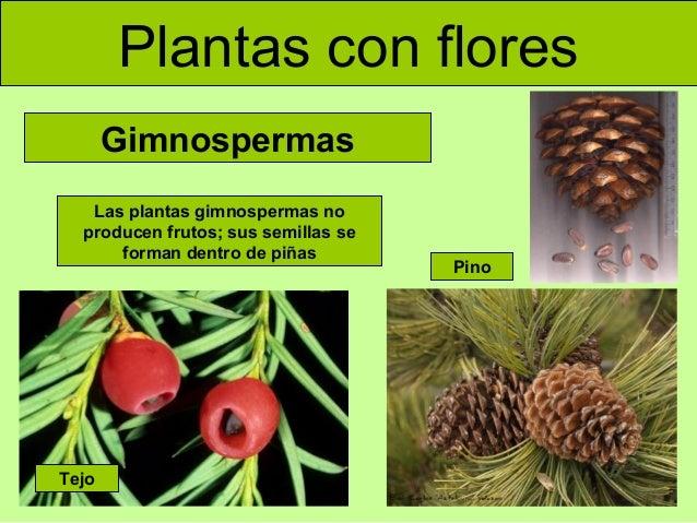 Las plantas for Como se llaman los arboles que no pierden sus hojas
