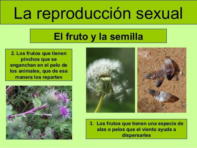 Plantas que se producen asexualmente