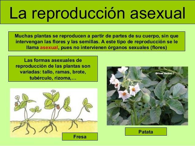 Reproduccion asexual de las plantas definiciones