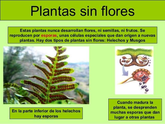 Reproduccion asexual plantas sin flores