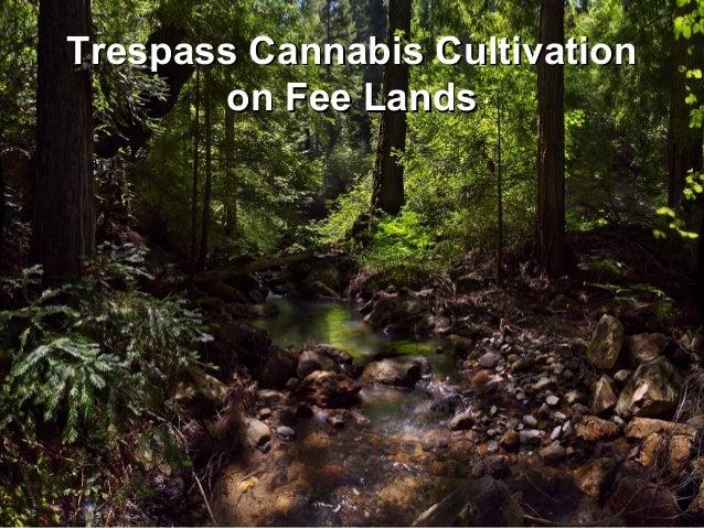 Trespass Cannabis CultivationTrespass Cannabis Cultivation on Fee Landson Fee Lands