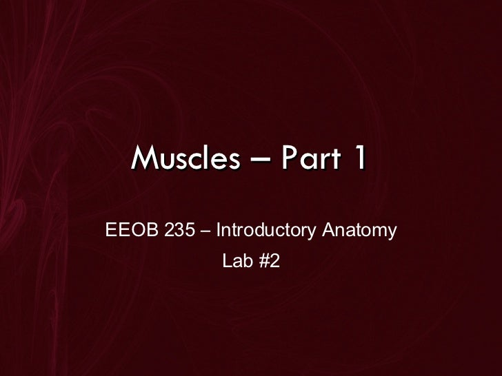 Muscles – Part 1 EEOB 235 – Introductory Anatomy Lab #2