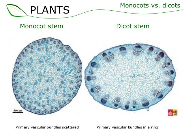 02 plant struct... Xylem Cell Diagram