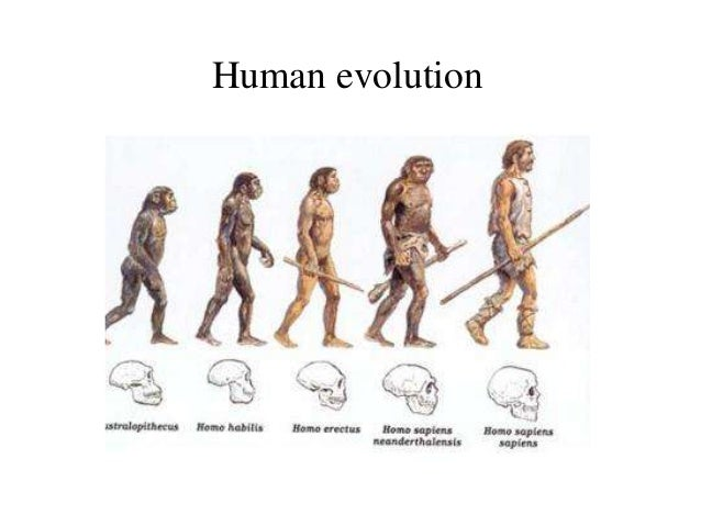 Human Evolution Timeline Future