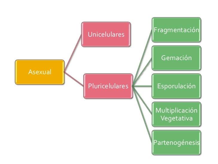Reproduccion celular asexual mitosis