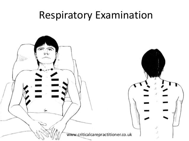 Structured examination of the Respiratory System