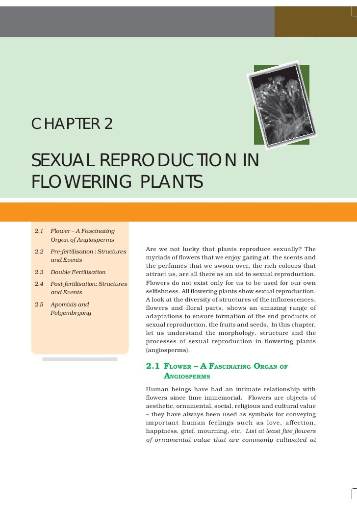 CHAPTER 2SEXUAL REPRODUCTION INFLOWERING PLANTS2.1   Flower – A Fascinating      Organ of Angiosperms2.2   Pre-fertilisati...