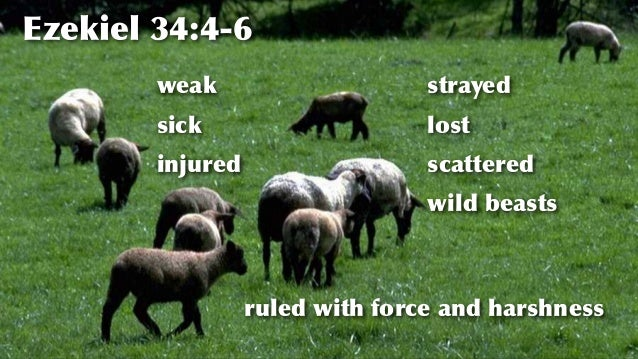 https://image.slidesharecdn.com/02sheepnn-160725005210/95/why-do-sheep-need-shepherds-6-638.jpg?cb=1469408073