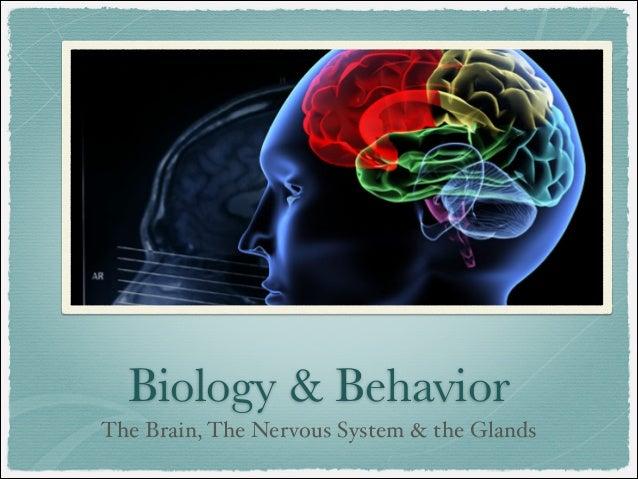Biology & Behavior The Brain, The Nervous System & the Glands