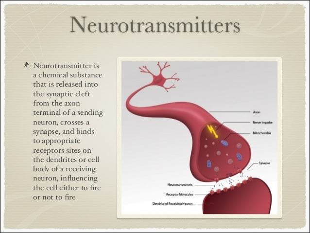 The brain parts and functions neurotransmitters neurotransmitter ccuart Image collections