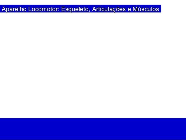 Aparelho Locomotor: Esqueleto, ArticulaçAparelho Locomotor: Esqueleto, Articulações e Músculosões e Músculos