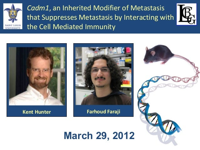 Cadm1, an Inherited Modifier of Metastasis that Suppresses Metastasis by Interacting with the Cell Mediated Immunity  Kent...