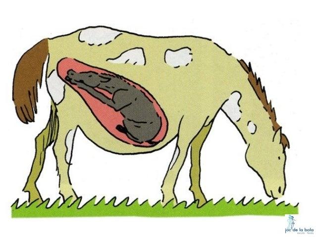HOW ARE ANIMALS BORN? Slide 3