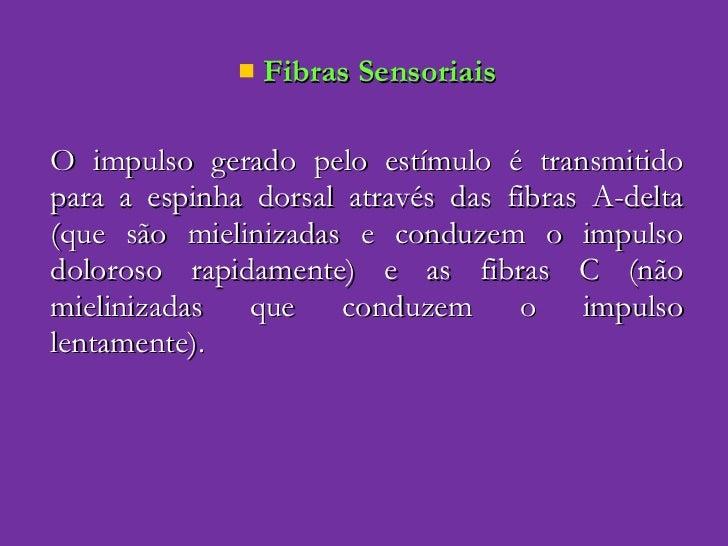 <ul><li>Fibras Sensoriais </li></ul><ul><li>O impulso gerado pelo estímulo é transmitido para a espinha dorsal através das...