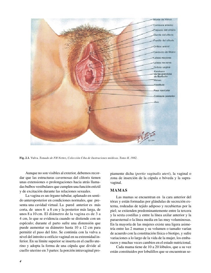 03 Ginecologia Y Obstetricia