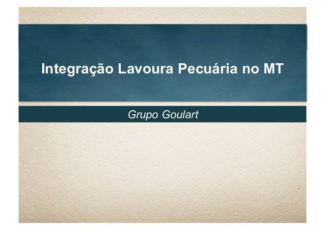 Integração Lavoura Pecuária no MT Grupo Goulart