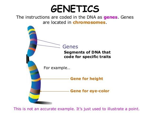 03 mendelian genetics