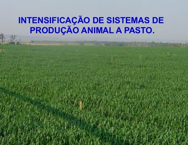 INTENSIFICAÇÃO DE SISTEMAS DE   PRODUÇÃO ANIMAL A PASTO.