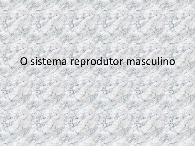 O sistema reprodutor masculino