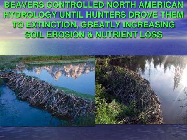 Thomas Goreau - Eco-restoration Success Stories