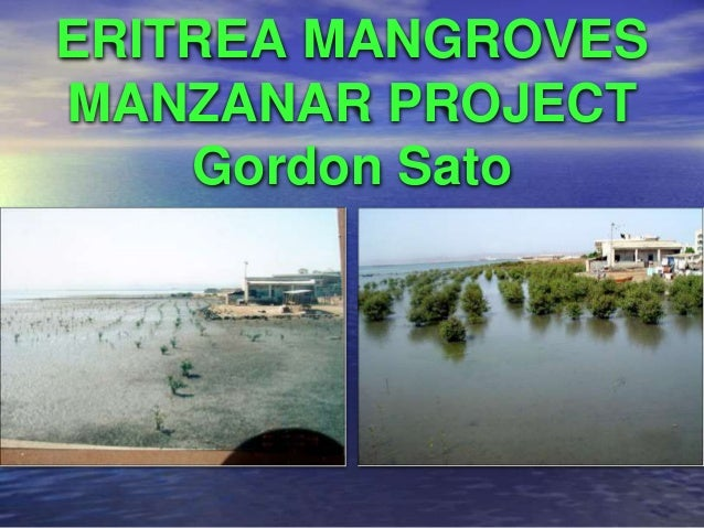 PLANTED MANGROVE FOREST RESTORED  FISHERIES OF MOLACABOC ISLAND, SAGAY,  NEGROS OCCIDENTAL, PHILIPPINES  Alfredo Marañon  ...