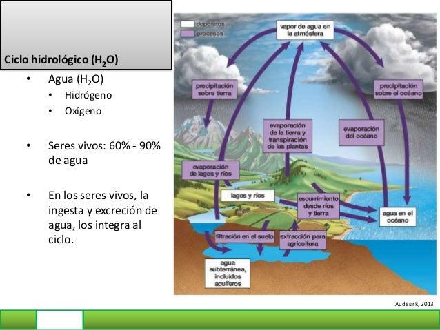 Ciclo del Nitrógeno • N2: gas atmosférico • NH3 (amoniaco), NO2 - (nitrito), NO3 - (nitrato) • Proteínas, Bases nitrogenda...