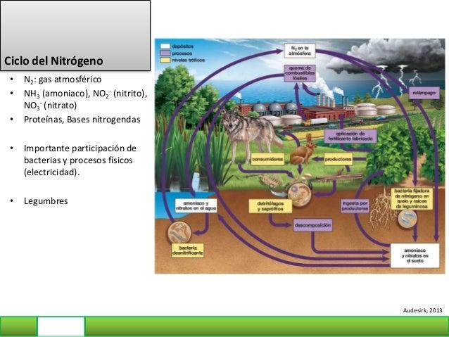 ¿Qué ocurre cuando los seres humanos desestabilizan los ciclos? • Sobrecargar los ciclos del nitrógeno y del fósforo daña ...