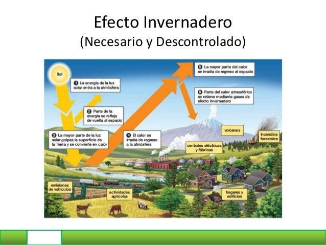 Flujo de materia y energía en ecosistemas