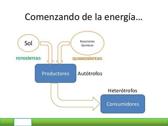 Comenzando de la energía… Productores Sol Reacciones Químicas FOTOSÍNTESIS QUIMIOSÍNTESIS Consumidores Autótrofos Heterótr...