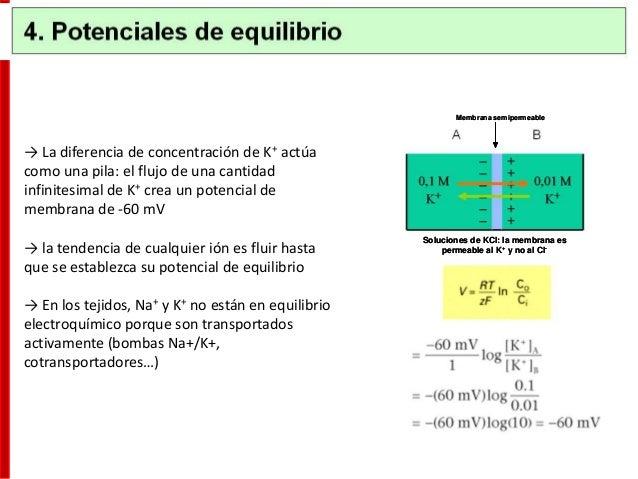 • El potencial de acción se debe a los cambios rápidos y transitorios de las conductancias del Na+ y K+ • Los canales volt...
