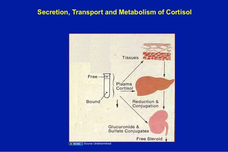 corticosteroid-binding