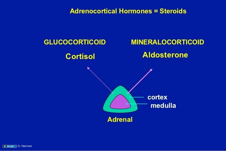 adrenocortical steroids examples