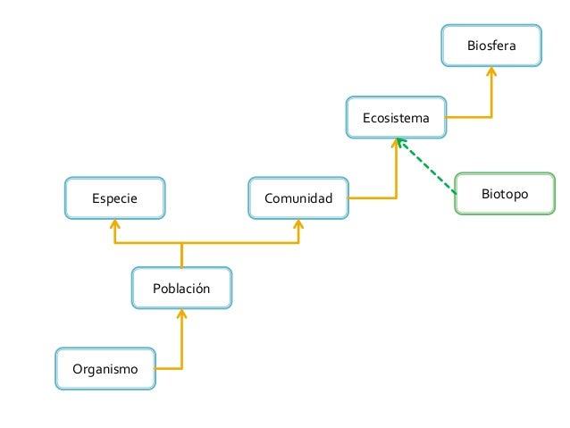 Organismo Ecosistema ComunidadEspecie Población Biosfera Biotopo