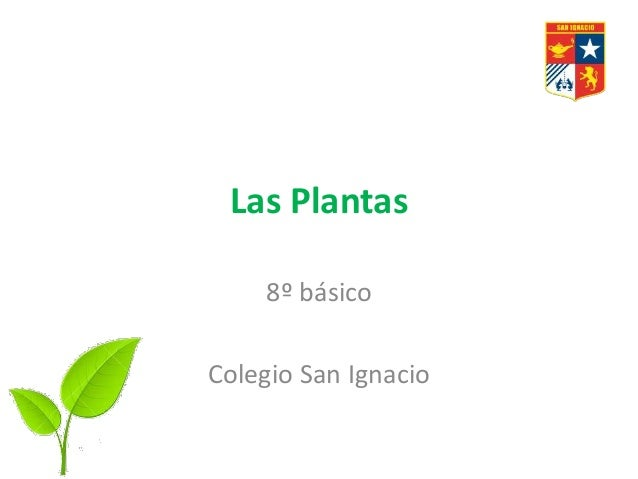 Las Plantas 8º básico Colegio San Ignacio