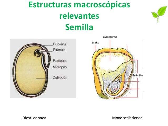 Estructuras macroscópicas relevantes Fruto