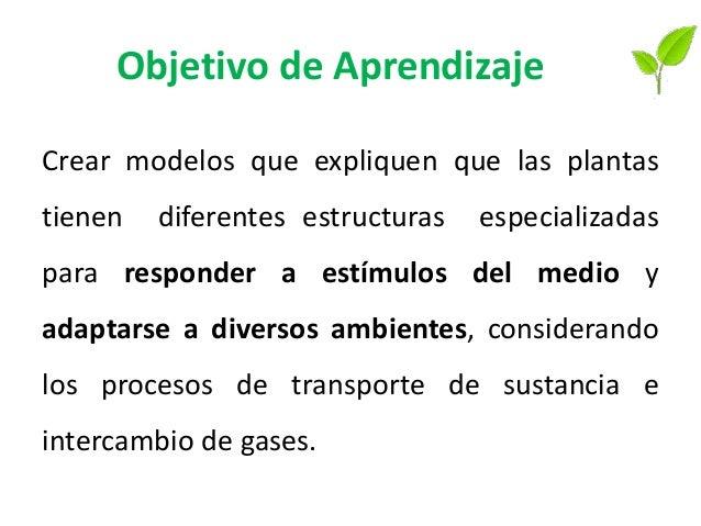 Objetivo de Aprendizaje Crear modelos que expliquen que las plantas tienen diferentes estructuras especializadas para resp...