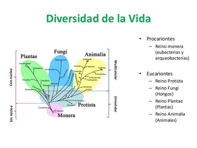 Diversidad de la Vida • Procariontes – Reino monera (eubacterias y arqueobacterias) • Eucariontes – Reino Protista – Reino...