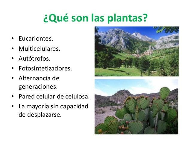 ¿Qué son las plantas? • Eucariontes. • Multicelulares. • Autótrofos. • Fotosintetizadores. • Alternancia de generaciones. ...