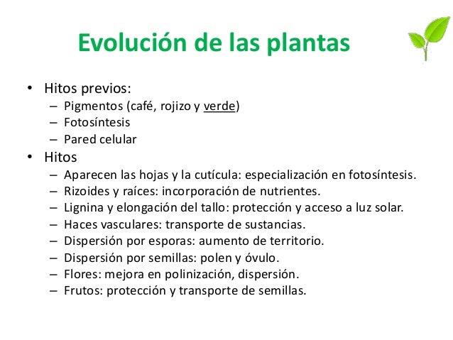 Diversidad y evolución Los cuatro grupos principales de plantas son briofitas, plantas vasculares sin semillas, y dos grup...